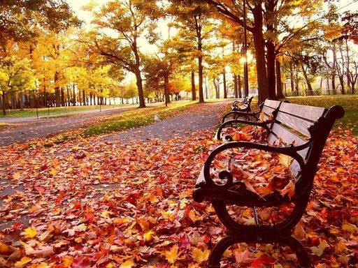 Mùa thu xứ Hàn mang một vẻ đẹp của sự bình yên