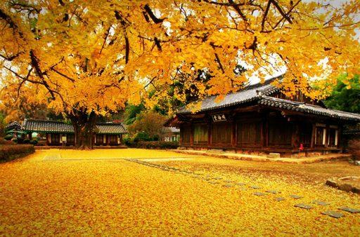 Du lịch Seoul mùa thu – mùa của sắc lá vàng